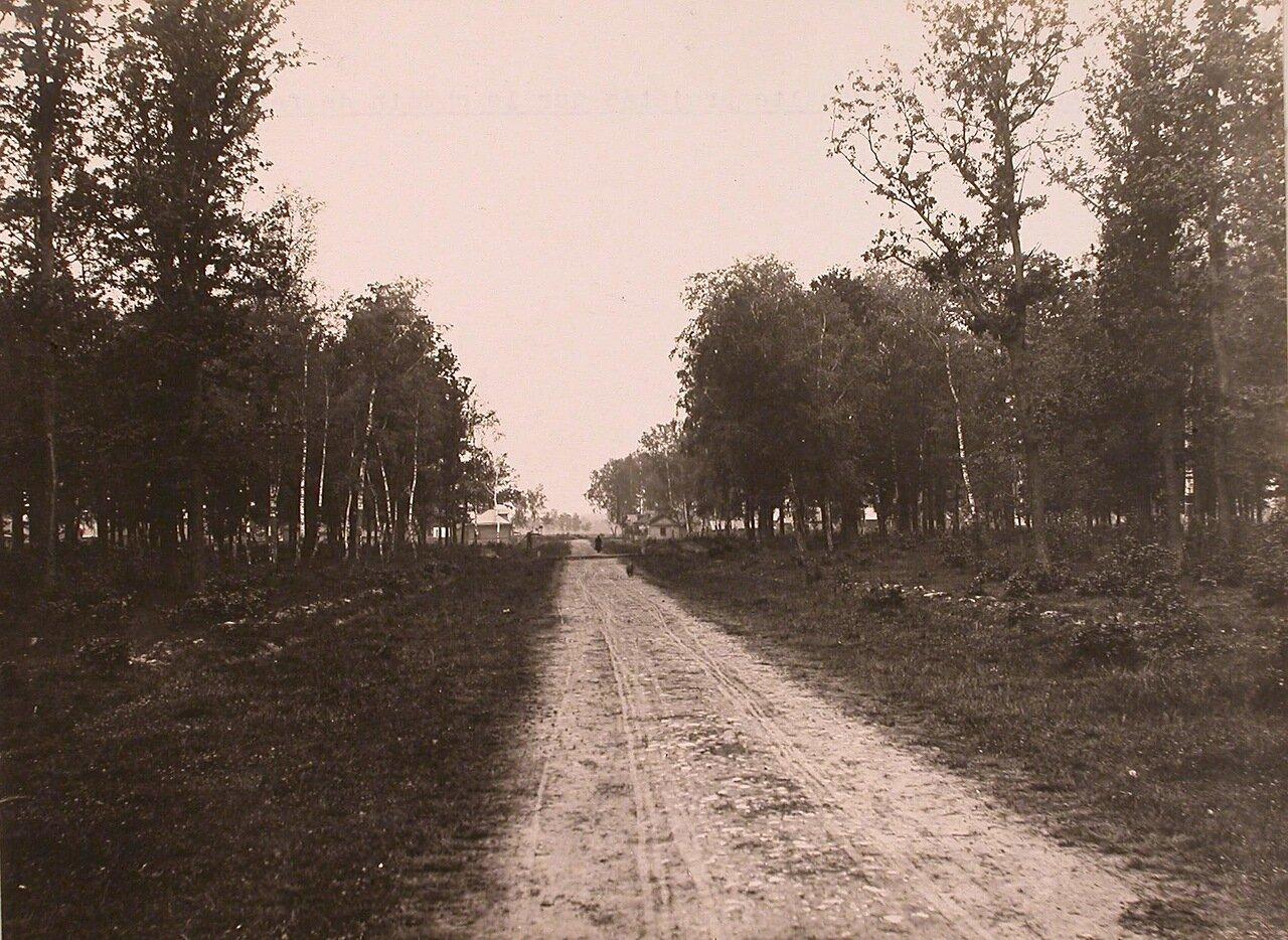 Вид на дорогу, ведущую к месту будущей остановки на Николаевской железной дороге