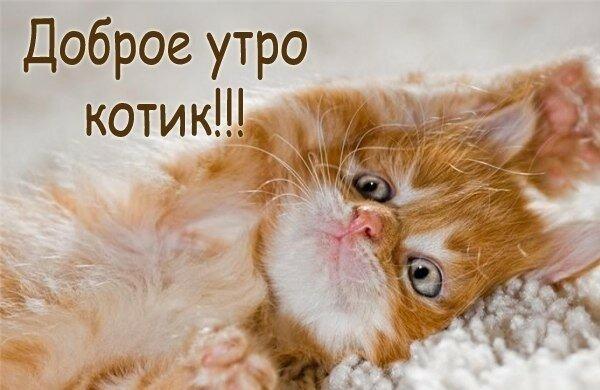 Загрузить, открытка доброе утро мой любимый котик