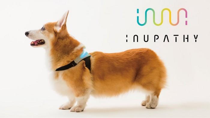 «Трудности перевода»: создан ошейник, который поймёт эмоции собак и переведёт их хозяину (9 фото)