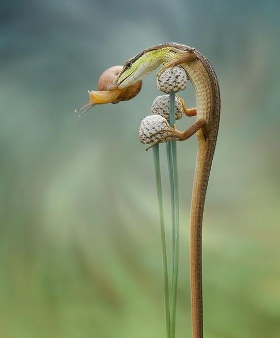 В отличие от змей, ящерицы имеют подвижные, разделенные веки, а также упругое, вытянутое тело с длин