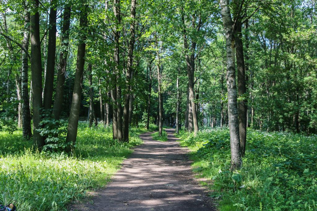 Не пугайтесь, это не лес, а всего лишь маленький перелесок. Вам точно туда.