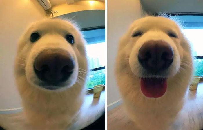 Как выглядят животные, которых похвалили