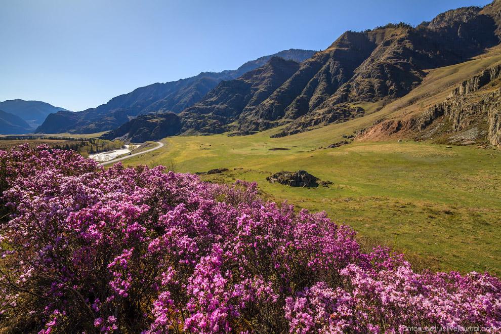 5. На фоне скалистых гор цветы смотрелись особенно ярко.