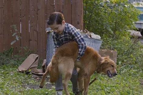 Премьеру фильма «Собачья жизнь» отменили из-за насилия над псом— Бойкот заиздевательства