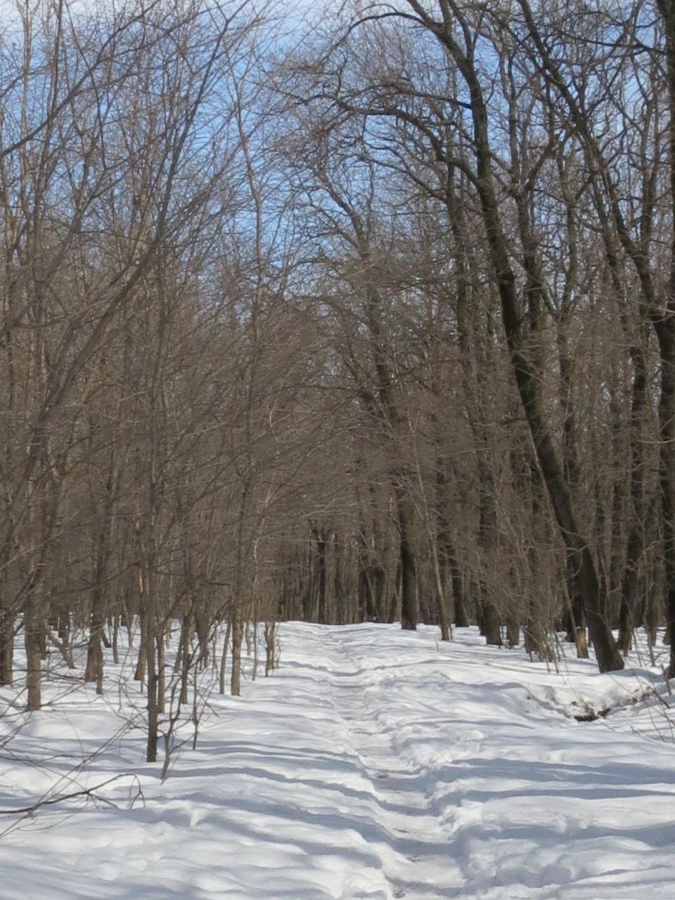 Парк - лес (3).jpg