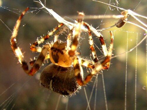 У паука 001 ... фотограф Александр Улисский