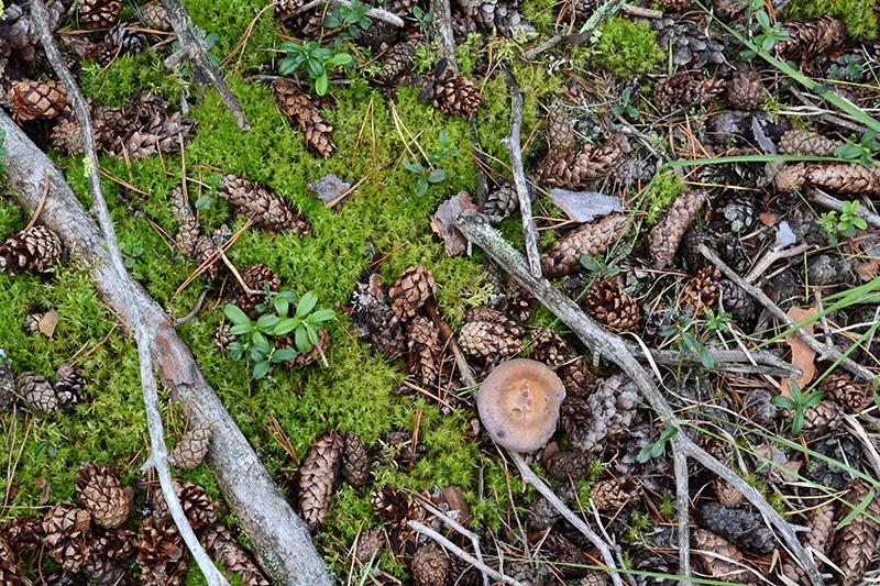 леса ковер 2.jpg