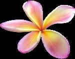 vesidn_seamemories_flower6.png