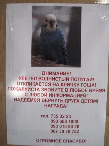 объявление, пропал попугай