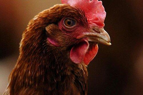 Фермеры Британии в знак протеста закидали яйцами налоговую службу