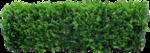 изгородь живая 1.png