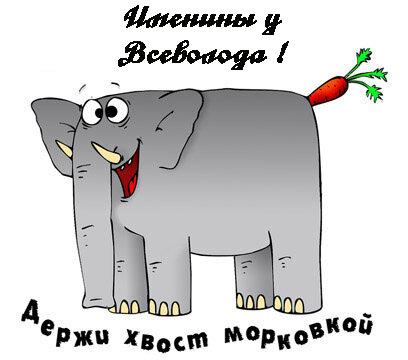 Именины у Всеволода! Держи хвост морковкой! открытка поздравление картинка