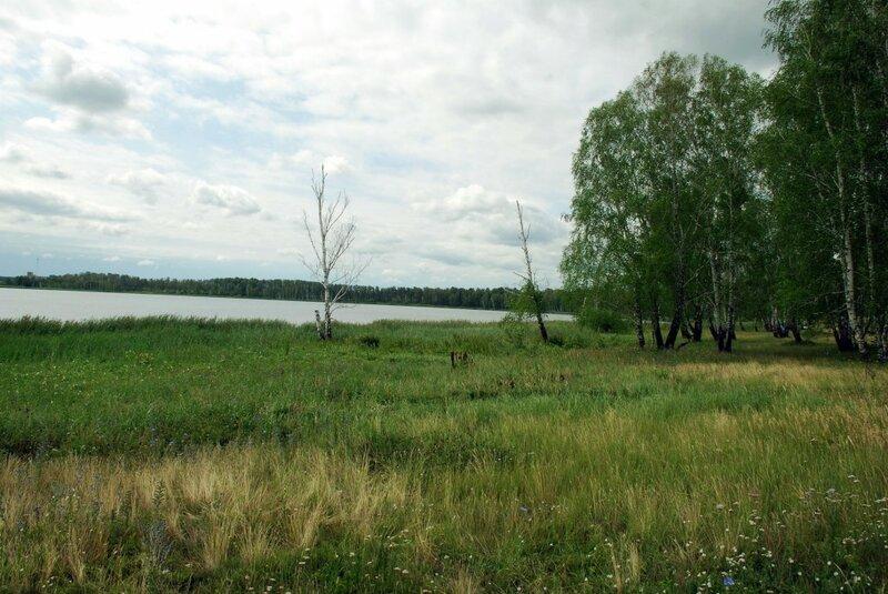 Вокруг озера березовый лес (29.07.2013)
