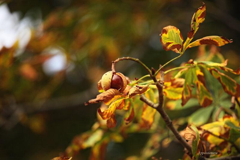 Каштановая осень