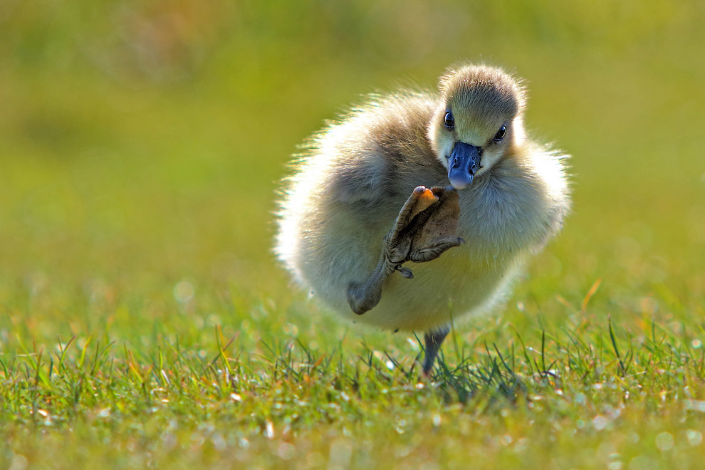 9. Тут нет орехов! (Фото John Brown | Comedy Wildlife Photography Awards):