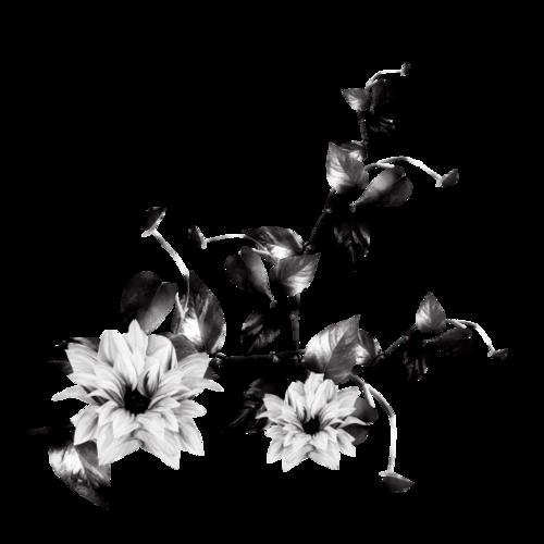 BLACK&WHITE_DBJ11.png