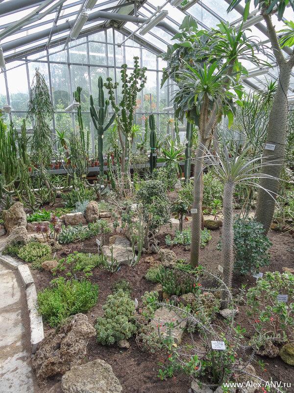 В настоящее время коллекция насчитывает около 2500 видов и разновидностей, половина из которых – кактусы.