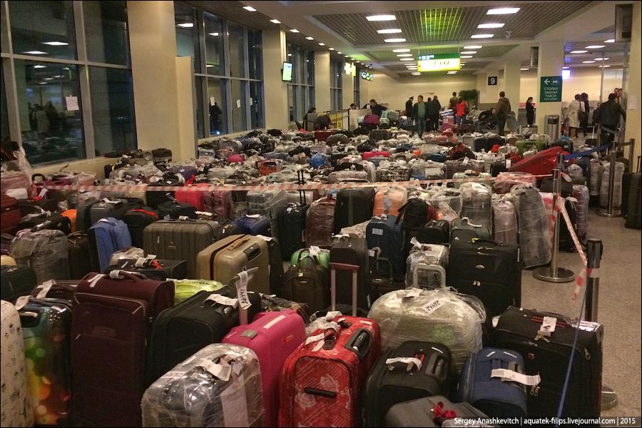 Египетский багаж, Домодедово