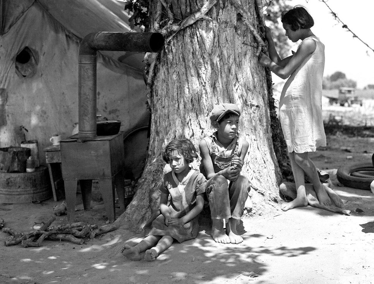 Потерявшие мать дети мигрантов. Они работают на хлопковом поле, 1936