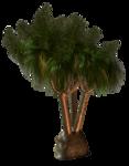 R11 - Palms - 2013 - 006.png