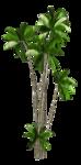 R11 - Palms - 2013 - 3 - 031.png