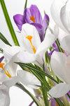Spring Flowers #4 (2).jpg