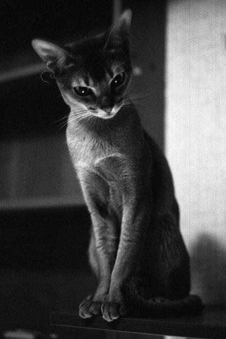 Кошки и семейство кошачьих