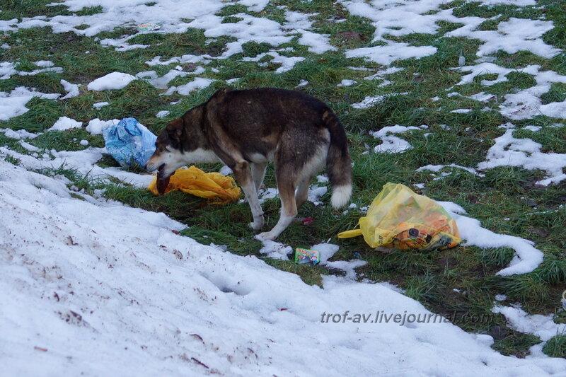 Собака - мусор поедака, Каринское