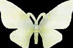 ldw_ShadesofSummer-butterfly6.png