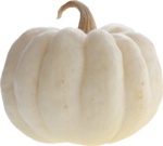 Holliewood_HauteHalloween_Pumpkin2.png