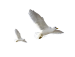 birds_png_by_lg_design-d4xeoax.png
