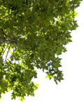 corner_leaves_by_evelivesey-d5t0bwr.png