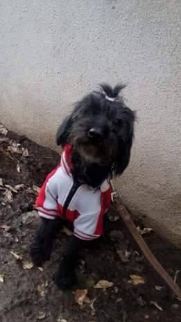 Лола собака из догпорта