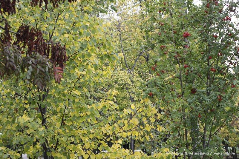 Осеннее настроение, Саратов, парк Победы, 21 сентября 2013 года