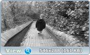 http//img-fotki.yandex.ru/get/9555/46965840.8/0_d3992_cdaed81b_orig.jpg