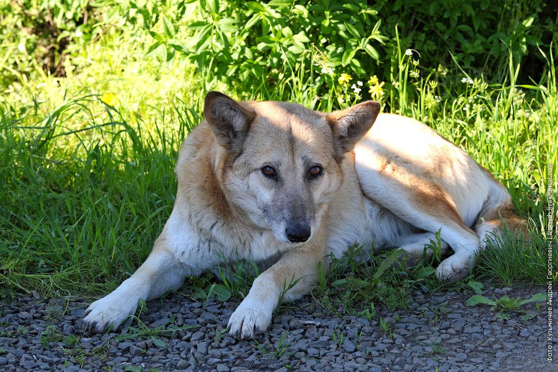 собака в Константиновске