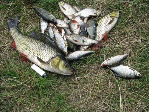 Рыба схватила за член писающего мальчика
