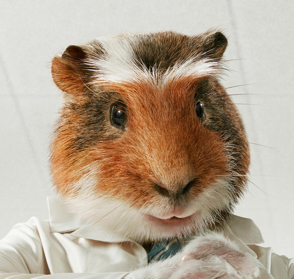 Морские свинки для рекламной кампании Energia / работа Chris Roome и  Happy Finish