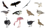 birds_png_set_by_mossi889-d4uy90v.png