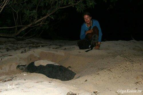 Остров Сангалаки