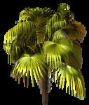 R11 - Palms - 2013 - 3 - 017.png