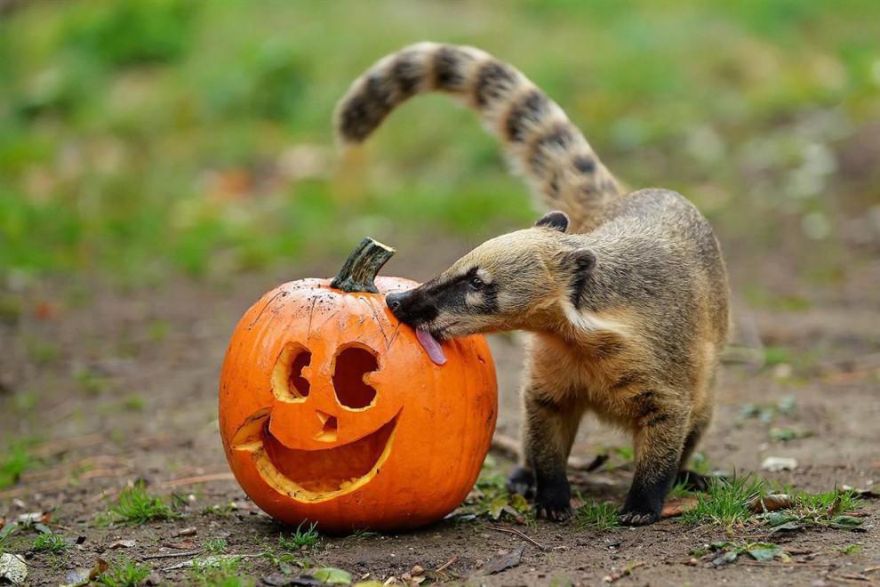 Новый, хэллоуин картинки прикольные с животными