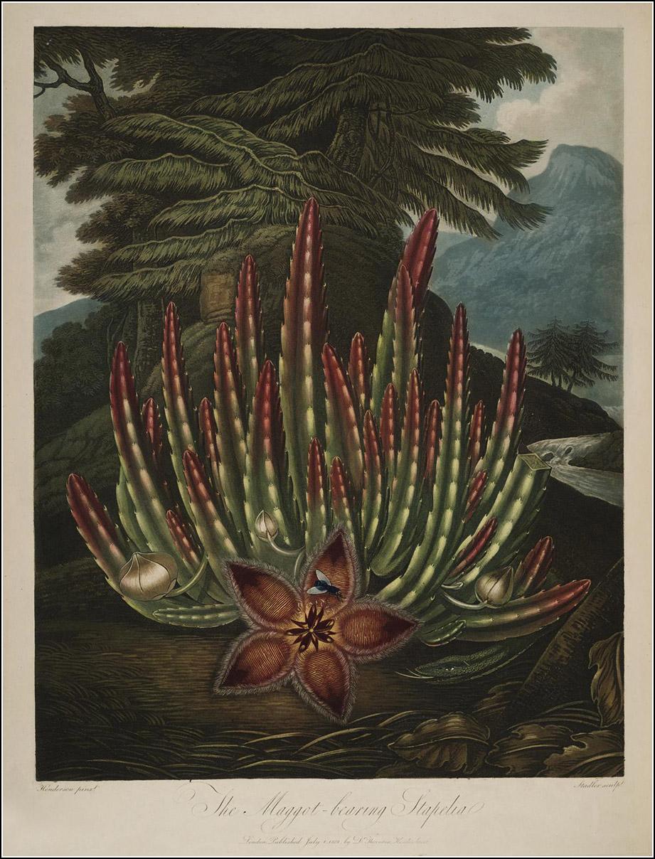 New illustration of the sexual system of Carolus von Linnaeus