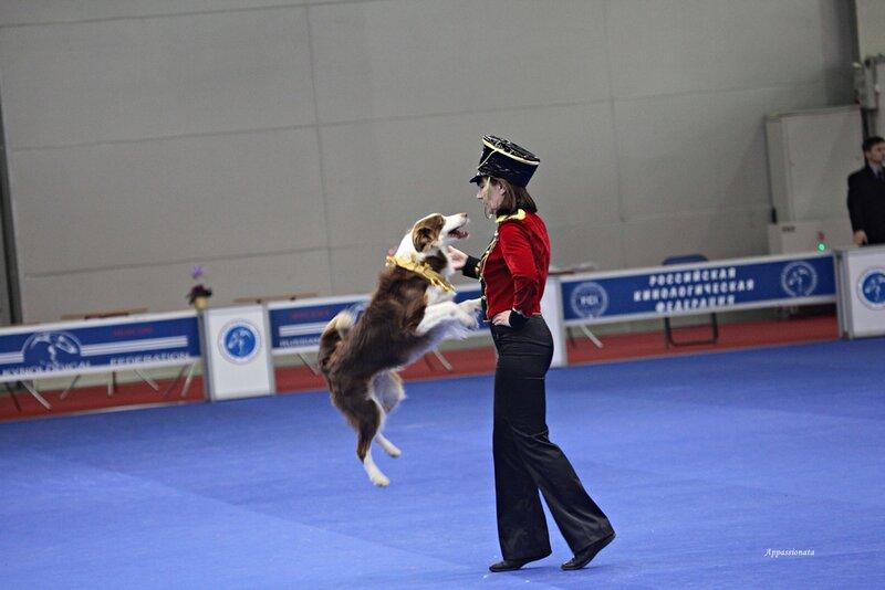 """Танцы с собаками """"Россия 2013"""""""