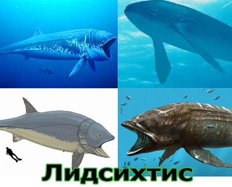 Самые большие животные в мире, существовавшие на земле (фото 17)