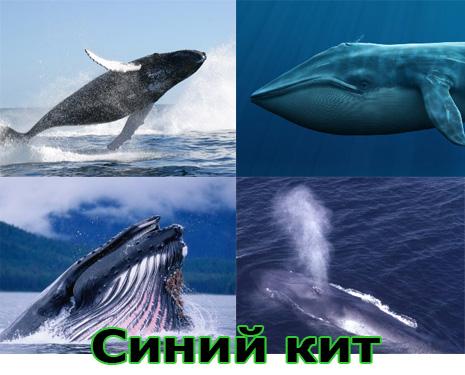 Самые большие животные в мире, существовавшие на земле (фото 20)