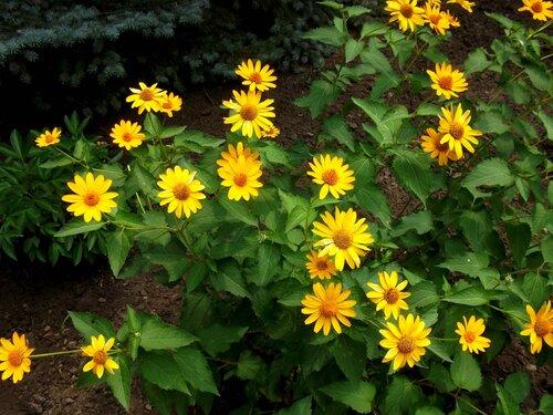 Желтые цветы