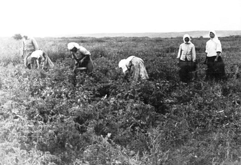 Сельские жители раннего СССР. 021.jpg
