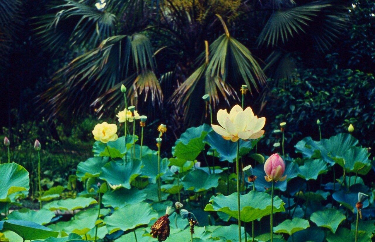 32. В ботаническом  саду