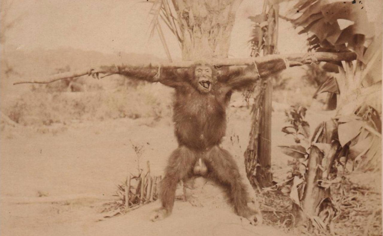 1930. Распятый шимпанзе